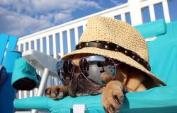 Vacanza sul lago di Garda con il cane